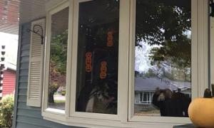window-cleaning-residential